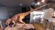 世界三大恐竜博物館の一つ「福井県立恐竜博物館」のストリートビューで、恐竜の迫力を体感!